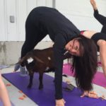 Goat Yoga & Langley Wineries Tour 8